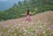 Photo of Câu chuyện về cây Tam Giác Mạch